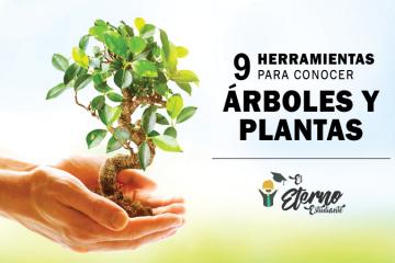 aplicaciones de arboles y plantas