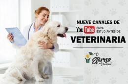 canales de youtube veterinaria